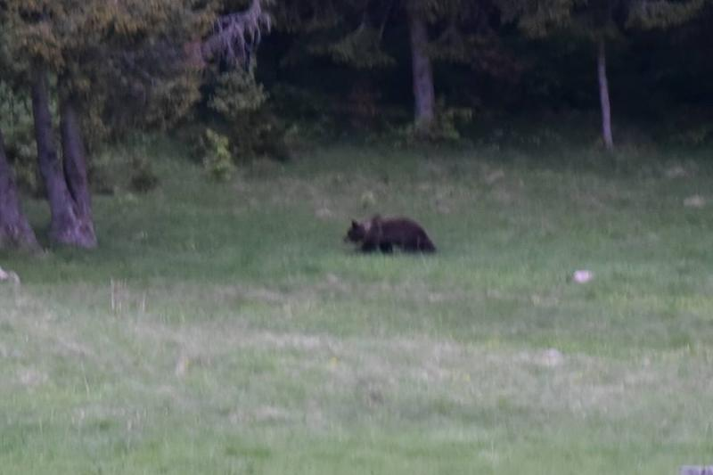 Observarea Ursului in Hasmas
