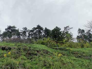 Szilos Forest