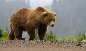 Rezervatia de Ursi