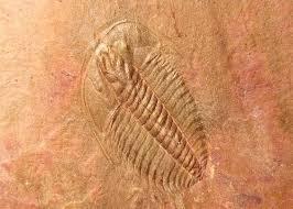 Locul fosilifer Valea Desului