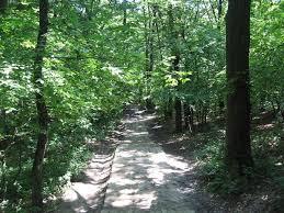 Baisa Forest