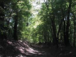 Bratca Forest