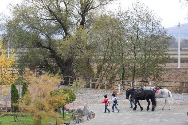 Horse riding, milking sheeps, luxury pool and a visit to the last romanian