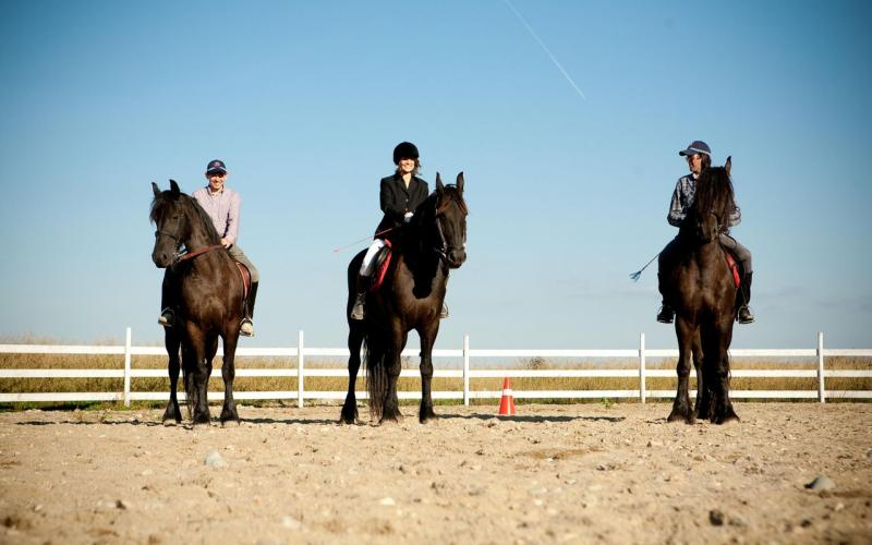 Robin Hood Equestrian Center