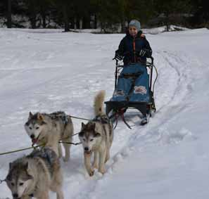 Sleighs pulled by Husky