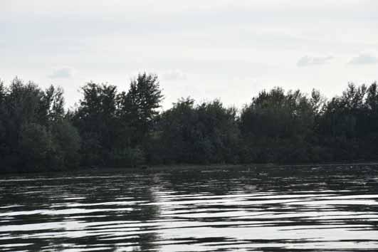 Simian Island